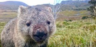 Wombat Wealth Review